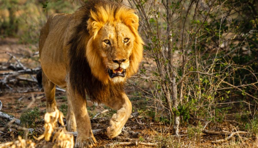 Το απόλυτο κουίζ για τα άγρια ζώα του πλανήτη (quiz)